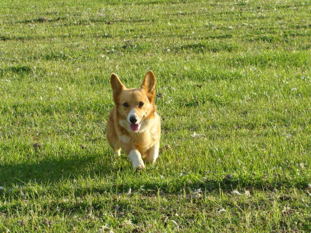 Dixie Running